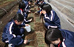 Horticulture Class landscape