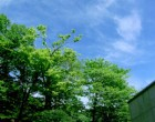 青空と新緑が美しく…