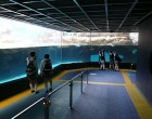 箱根園水族館-3