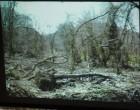 最初はこんなに荒れていた森が