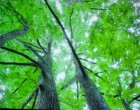木漏れ日があふれる森になり