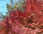四樹四色-1(万葉の小径)