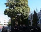 ニッケイの大木