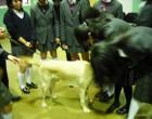 盲導犬協会-1