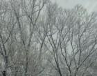 万葉の小径の木々も真っ白です
