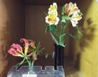 グロリオサとアルストロメリア(花名テスト用)